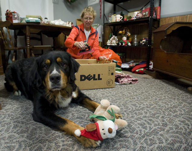 Robin Bradfield, president of Furry Friends Animal Rescue, unpacks donated merchandise in the  group's new thrift store located north of Woodstock while Scout, a Bernese mountain dog and former rescue of the group, looks on.  Rich Cooley/Daily